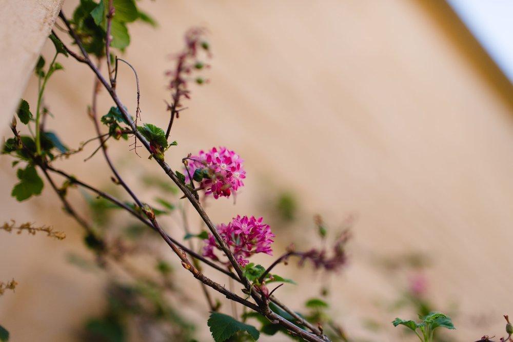 Spring_Morris_Photography_Travel_San_Francisco-1-23.jpg