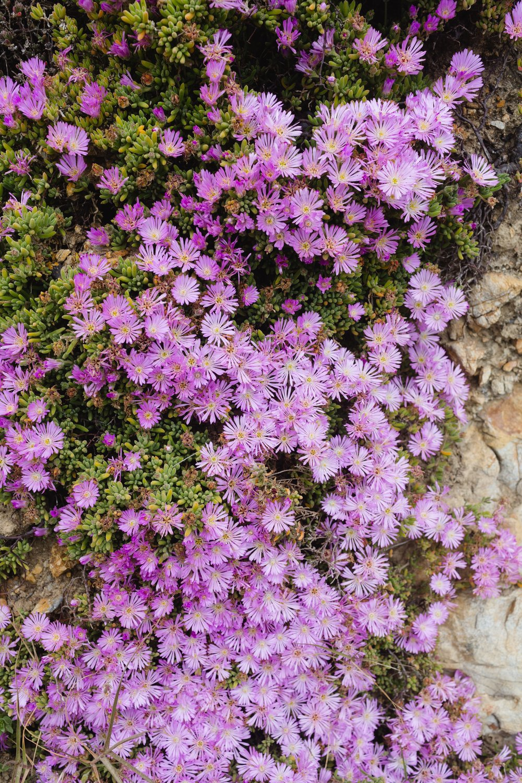 Spring_Morris_Photography_Travel_San_Francisco-1-3.jpg