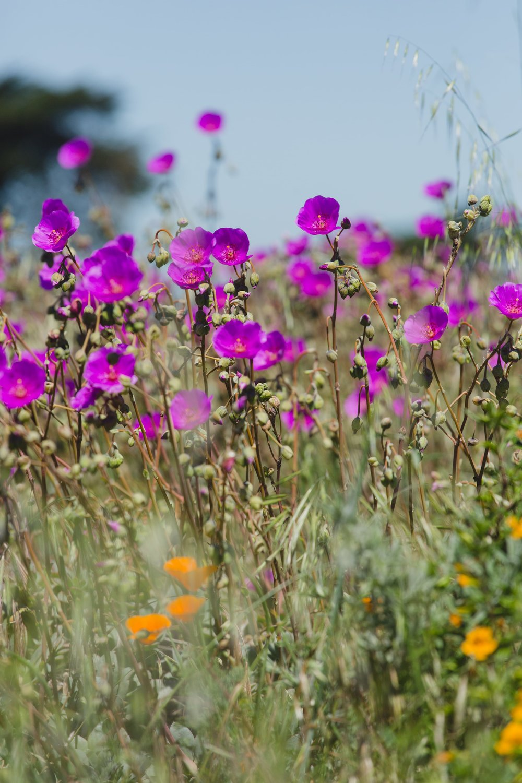 Spring_Morris_Photography_Travel_San_Francisco-1-31.jpg