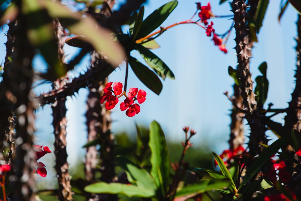 Spring-1-2.jpg