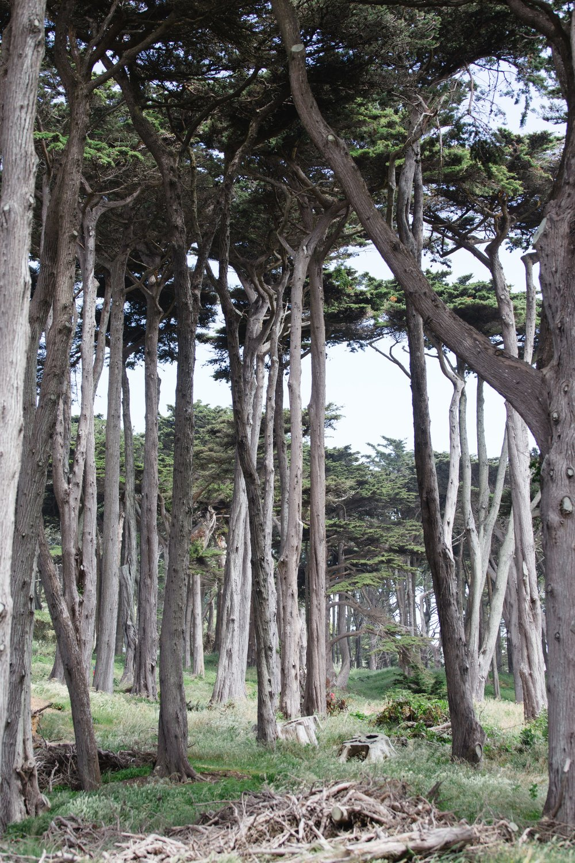 Spring_Morris_Photography_Travel_San_Francisco-1.jpg