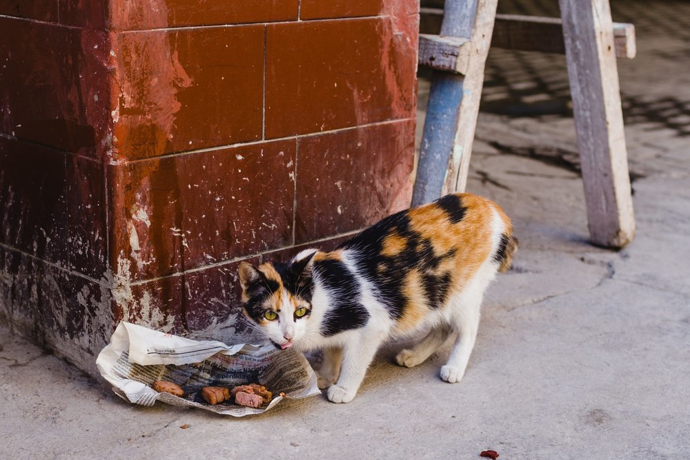 SpringMorrisPhotography_Travel_Havana_Cuba-1-55.jpg