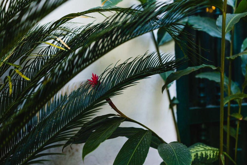 SpringMorrisPhotography_Travel_Havana_Cuba-1-73.jpg