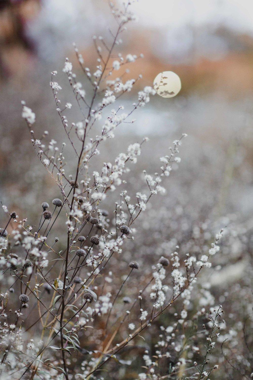 Spring_Morris_Photo_Travel_Photography-1-6.jpg