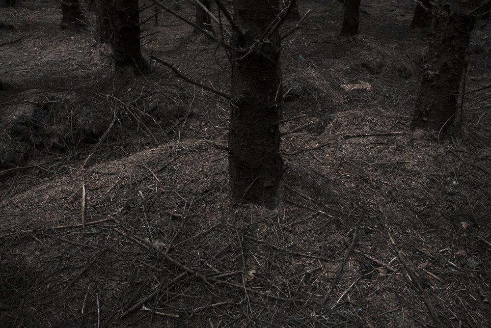 Deep Woods _VII.jpg