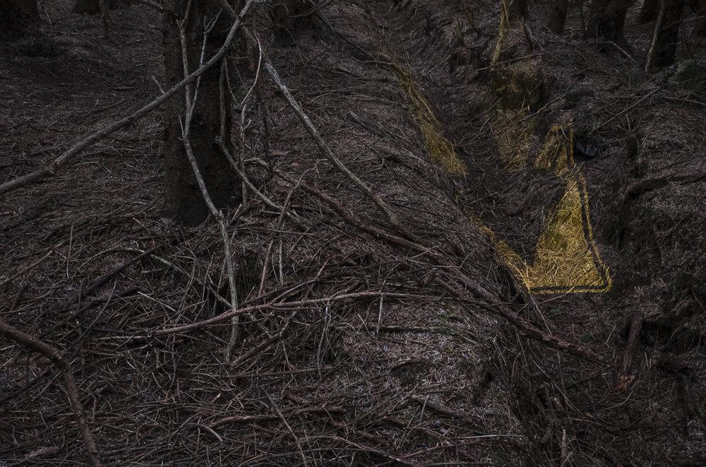 Deep Woods 1.3.jpg