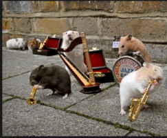 Or maybe I'm looking for the next big hamster band story.
