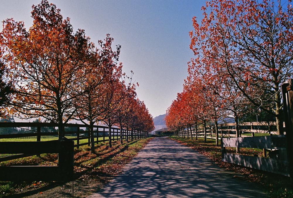 Guerneville, California