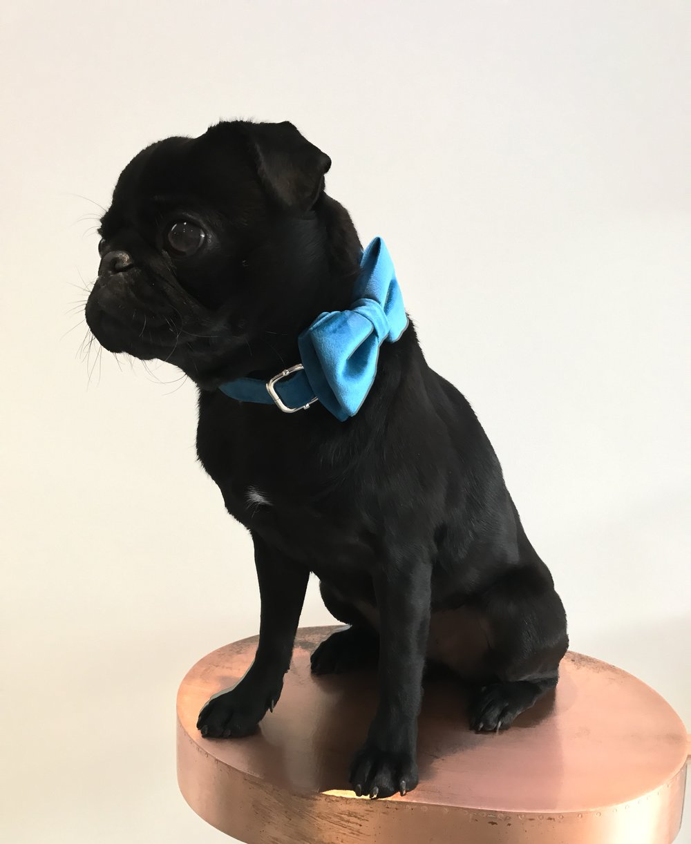 Percy  -  LONDONPercy is the original brand ambassador.  Not only the face of Percy and Co. but also a fantastic model.  In his passport photo he can be seen wearing The Constantine Collar.Percy enjoys long walks in the park and sitting next to the fire.  He dislikes postmen and cats.