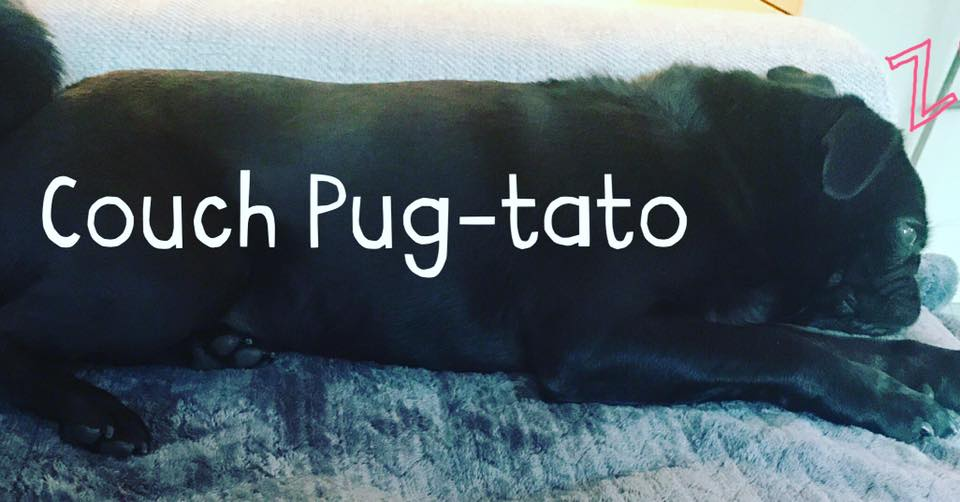 Couch Pug-tato