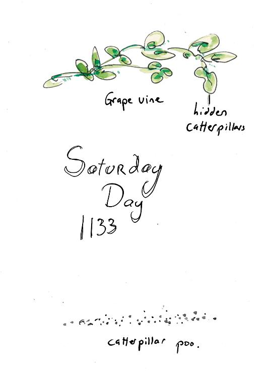zine 162.26.jpg