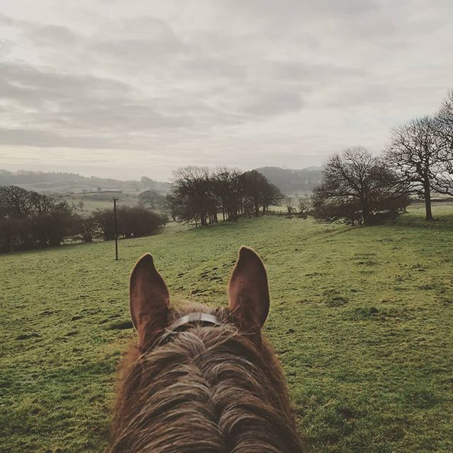 💚Pony therapy💚 #perfectsunday #downtime #horsetherapy
