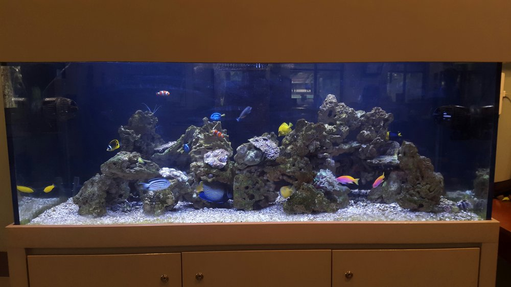 Reef aquarium kanha matai for Fish only saltwater tank