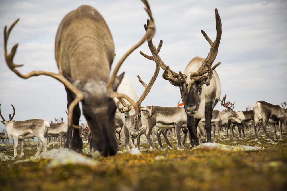 Foto: Siri Ø