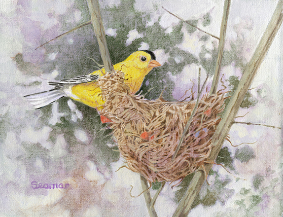 Goldfinch at Nest