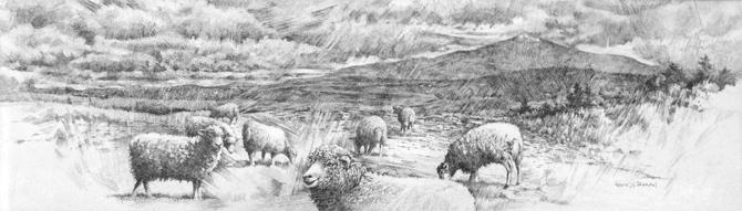 Dump Sheep
