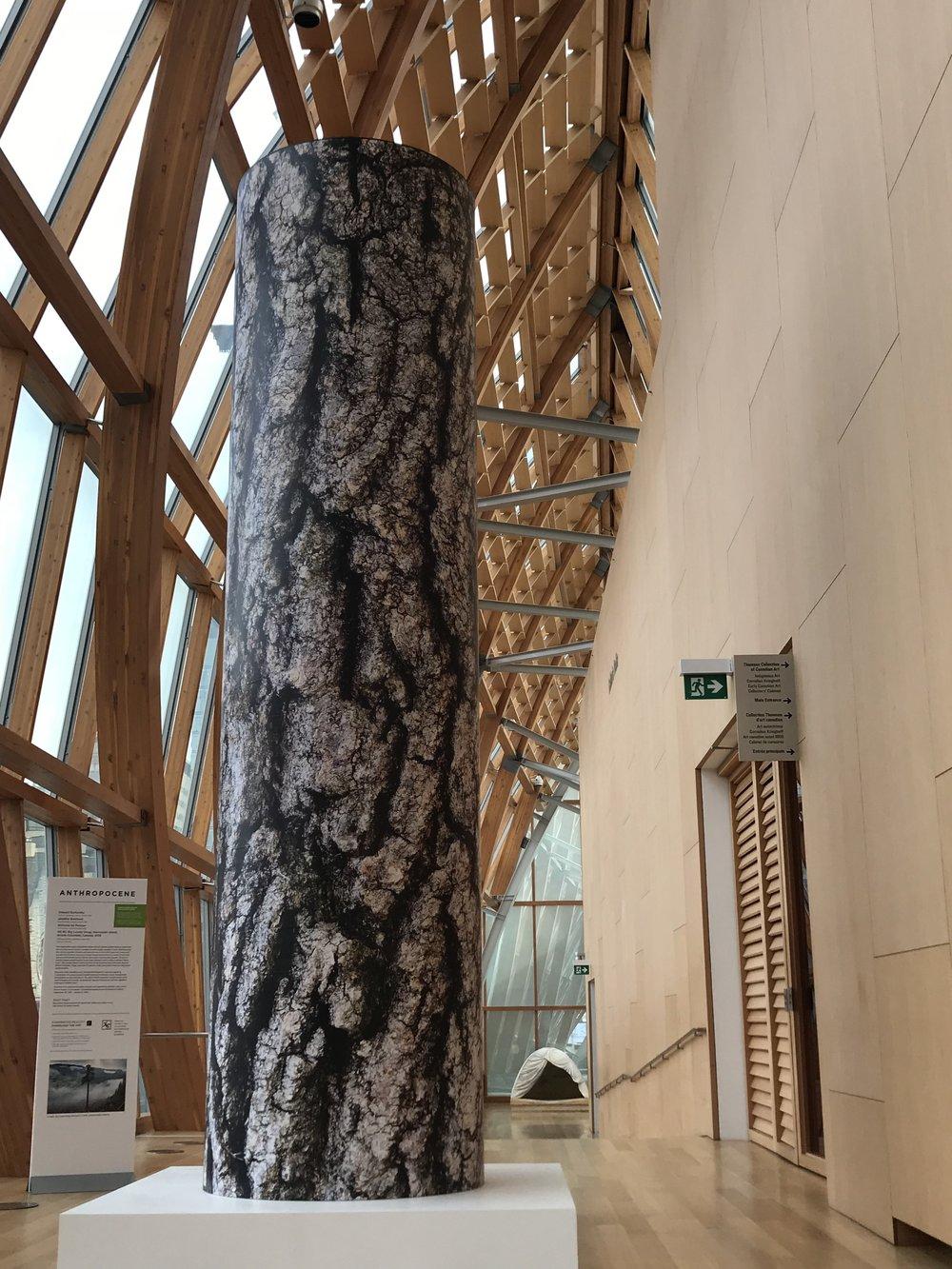 Big Lonely Doug in Galleria Italia. Too bad AR didn't work.