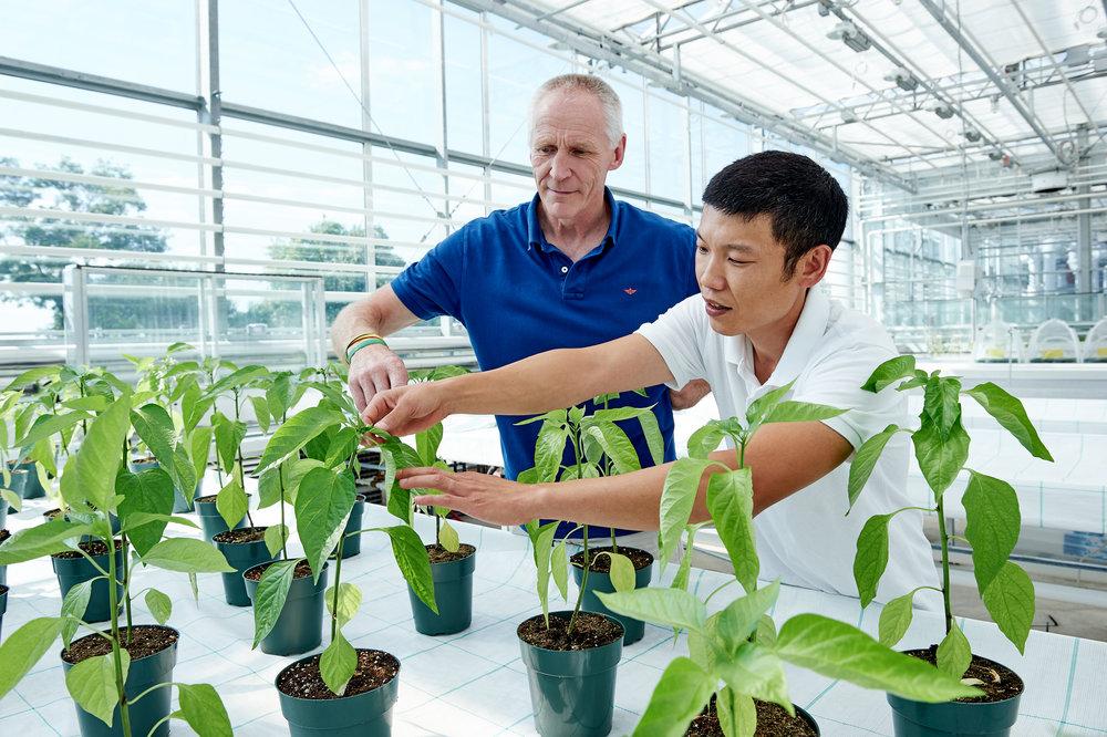 Marta-Hewson-industrial-photography-greenhouse-growers-Kitestring-Vineland-Research.jpg