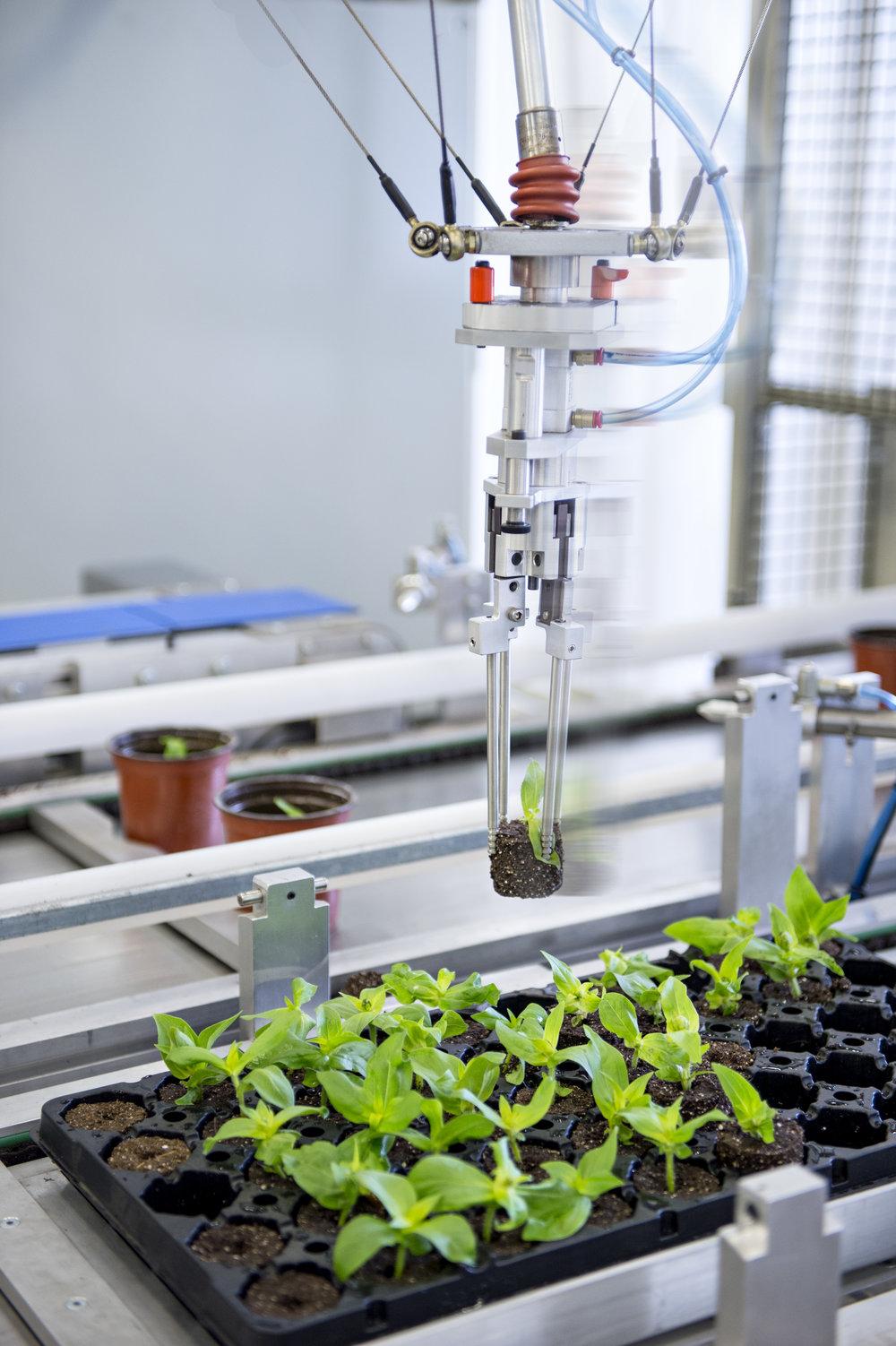 Marta-Hewson-industrial-photography-greenhouse-robotics-Kitestring-Vineland-Research.jpg