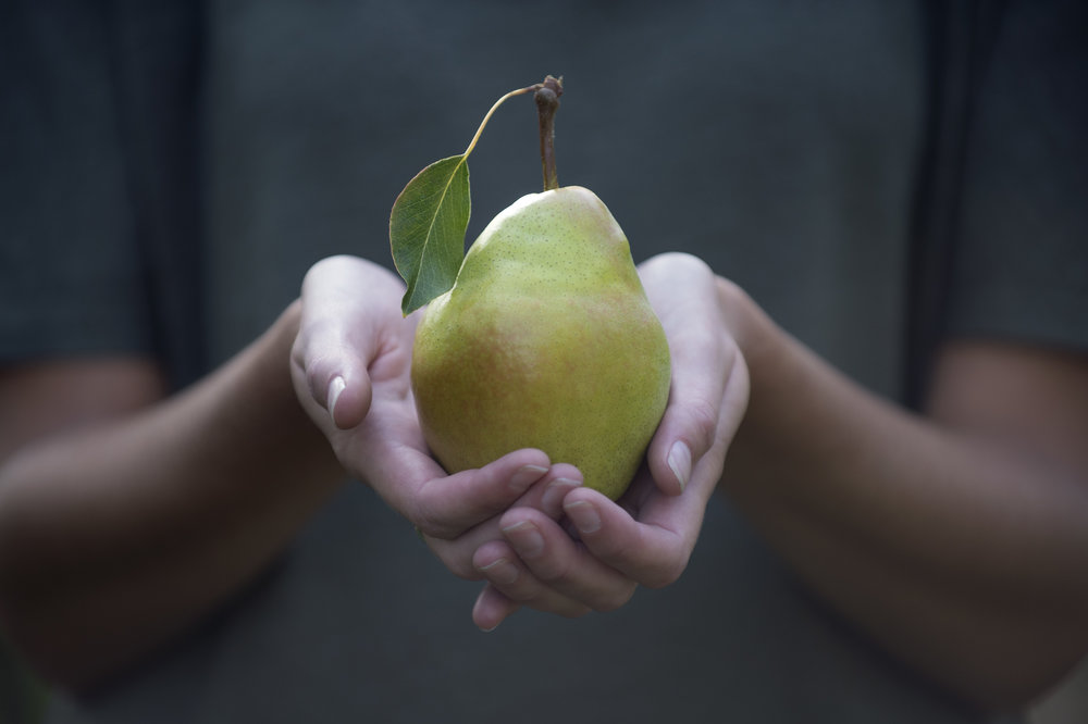 Marta-Hewson-Advertising-cold-snap-pears-Vineland-Research.jpg