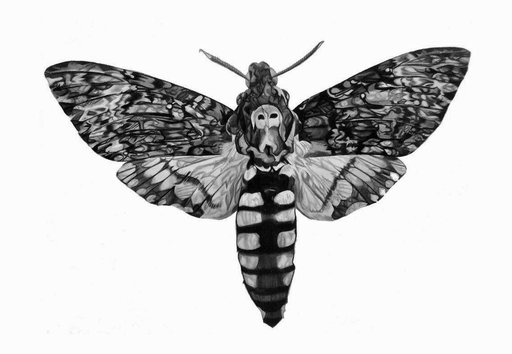Death's Head-Hawk Moth