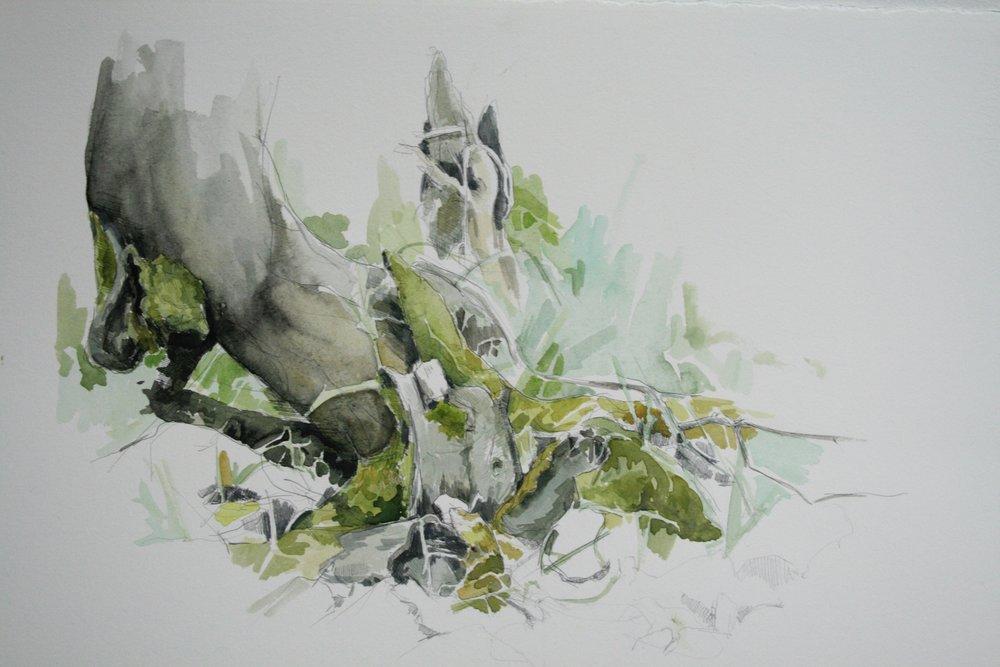 Sonoma Underbrush