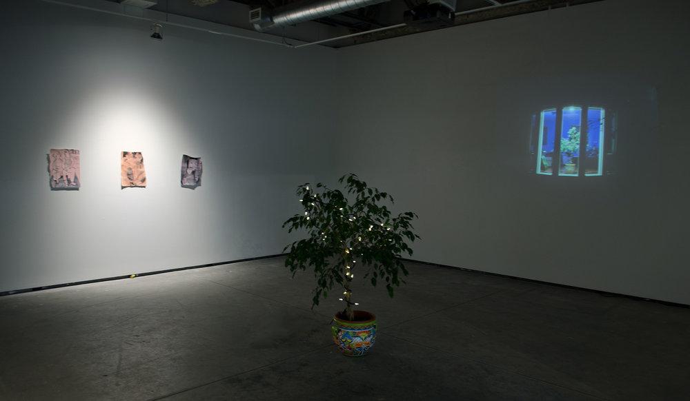 - Weeping FigInstallationFINA Gallery, The University of British Columbia, Kelowna2015