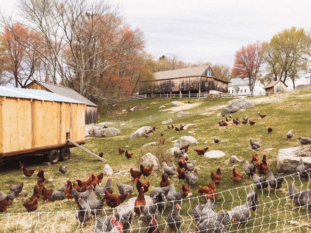 Deep Roots Farm_In Defense of Meat