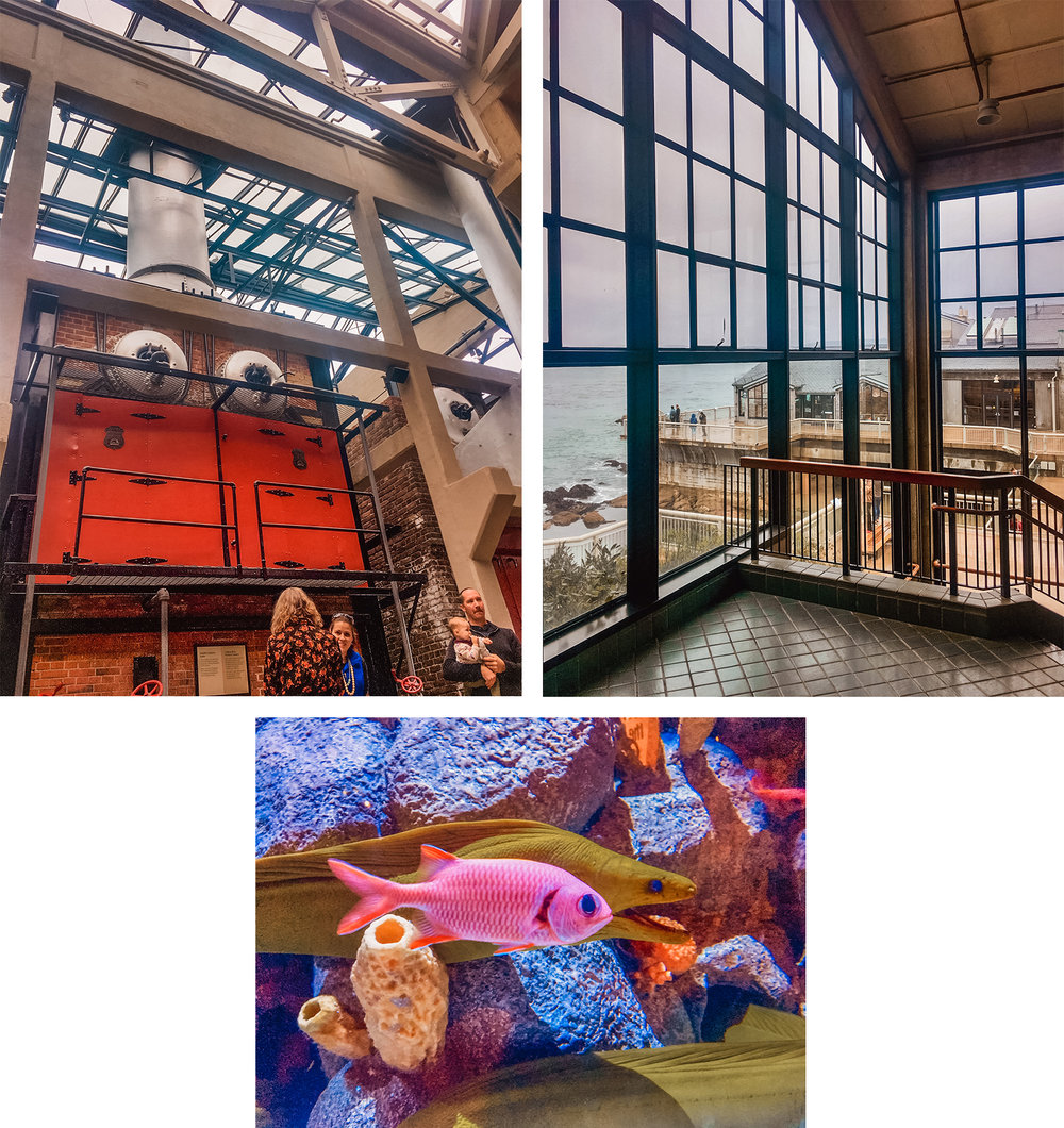 While in Monterey, I got to visit the Monterey Aquarium. 🐠 🐟 What an amazing building! (The animals were cool too, I guess) 😂 Check out that boiler in the front lobby. It's leftover from when the building was a sardine factory. The boiler stack extends right through the glass roof. So cool.