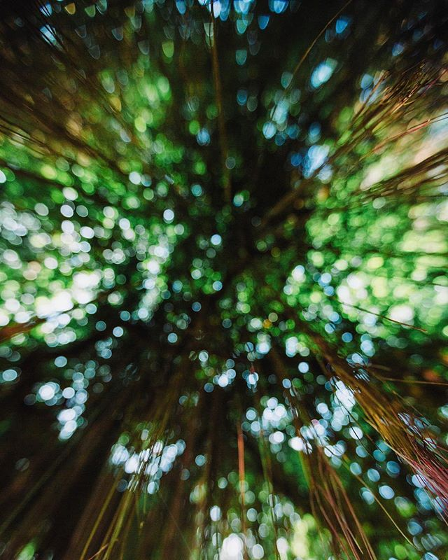 New eyes to see. . . . . . . . . . . . . #vscocam #vsco #bangkok #thailand #artofvisuals #agameoftones #photooftheday #instadaily #jungle #photographerslife