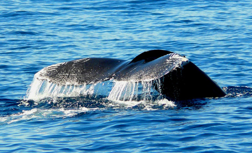 whale watching guide in Cabos - see whales up close in los cabo - NAS ADVENTURES.jpg