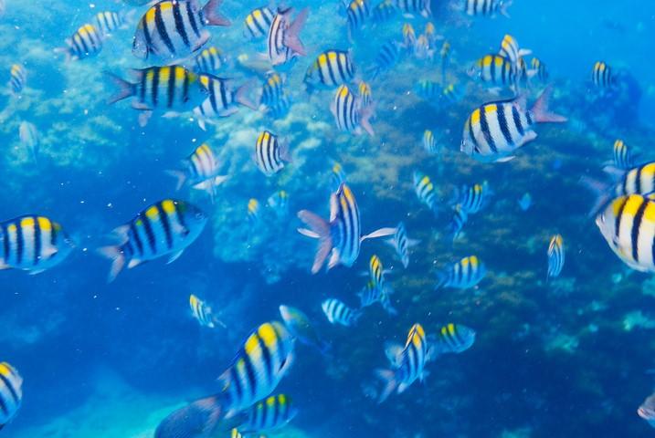 Chileno and Santa Maria Bay - Ultimate Snorkeling