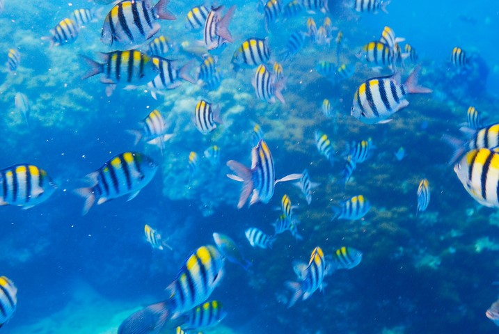 Pelican Rock - Ultimate Snorkeling