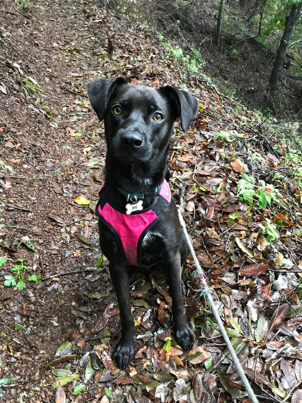 - Charlotte, Doggo NaturalistCamp Name: CharlieEducation: Puppy SchoolInterests: Running fast and chewing Favorite Quote: