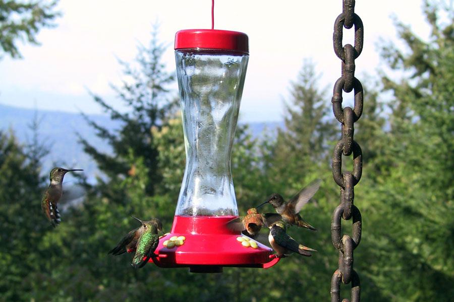 24 hummingbirds.jpg