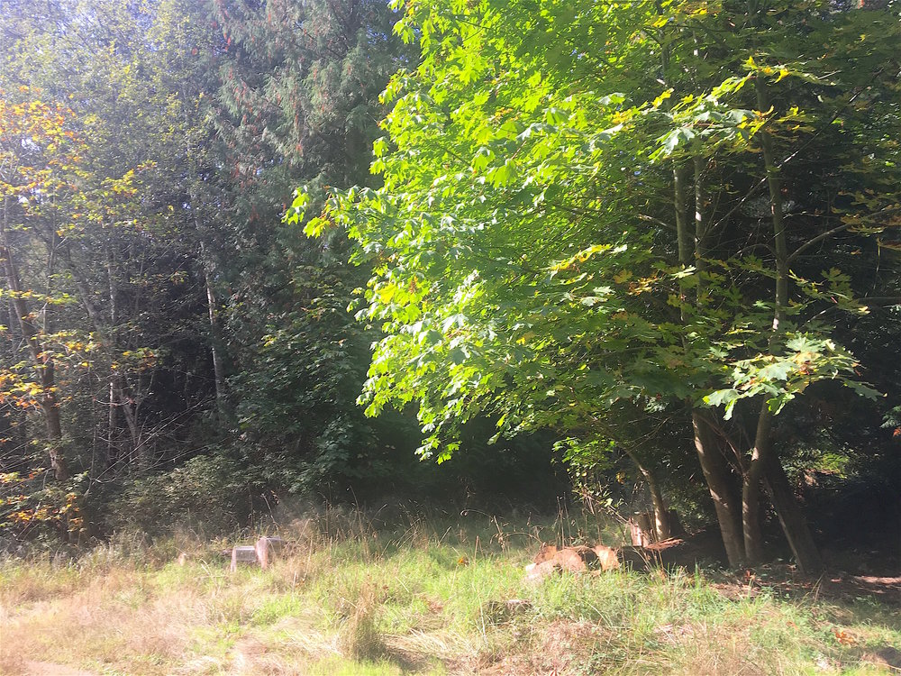 3.Maple Tree.jpg