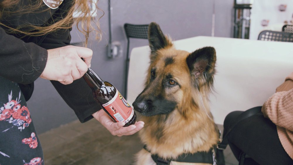 Show off your dog's class with a perfectly paired doggy-cigar and Bowser Beer.