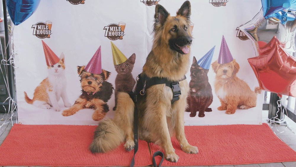 Give your dog the party they deserve, without the hassle!