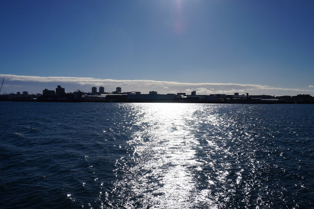 The sun bounces off the water as we catch the ferry to Viðey Island.
