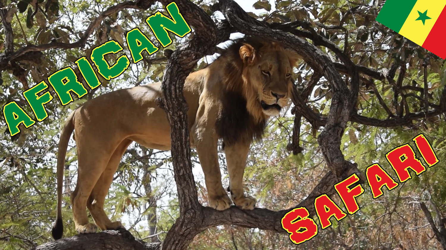 VIDEO: MY FIRST AFRICAN SAFARI — Travelling Tom   A UK
