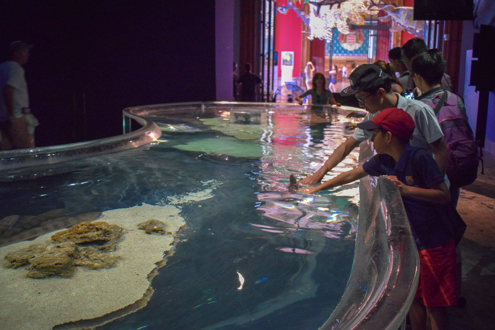 Visitors to the Oceanographic Museum stroking sharks.