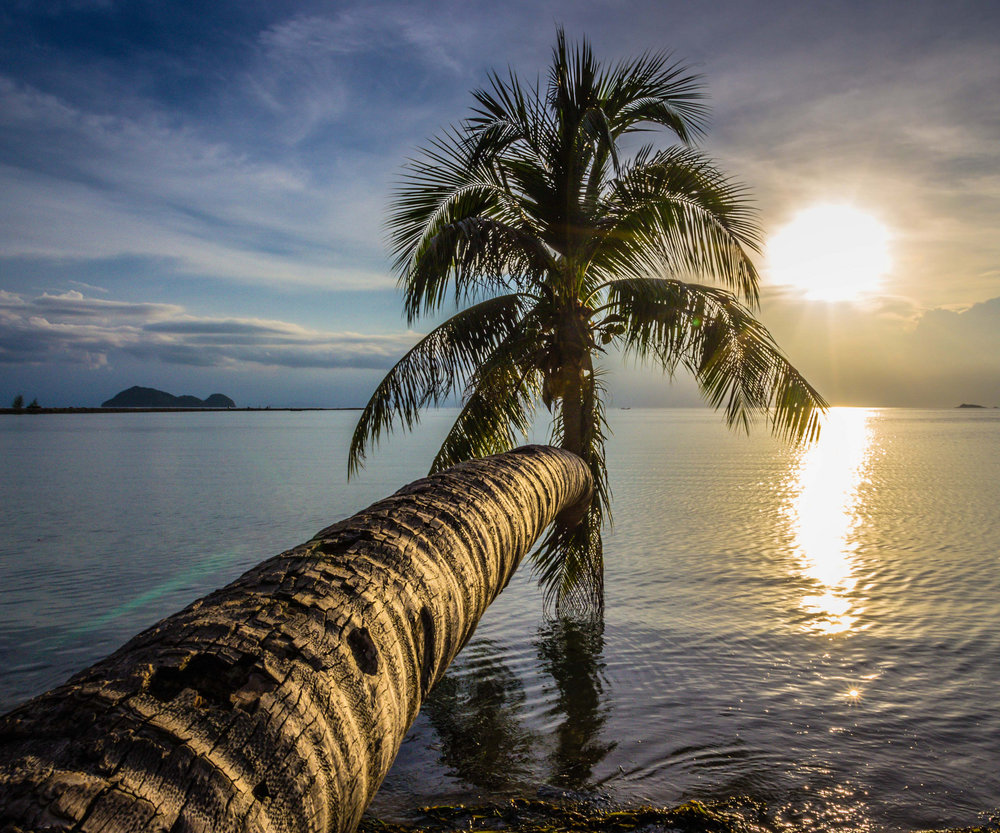 A palm tree stretches out to water in Koh Phangan. Image credit:    Chris Bird   /   Creative Commons