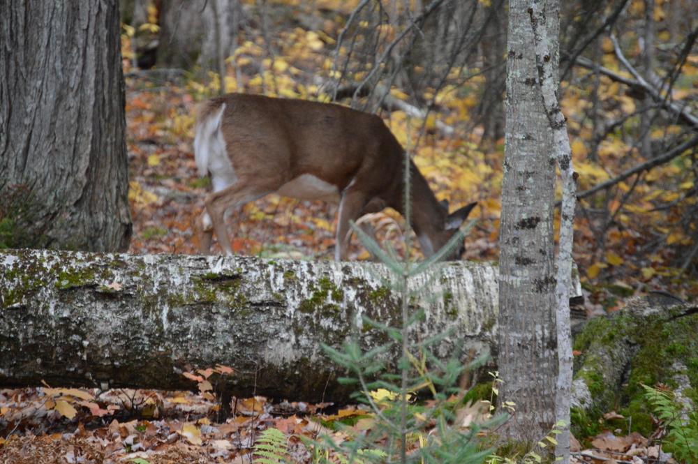 State Park Resident