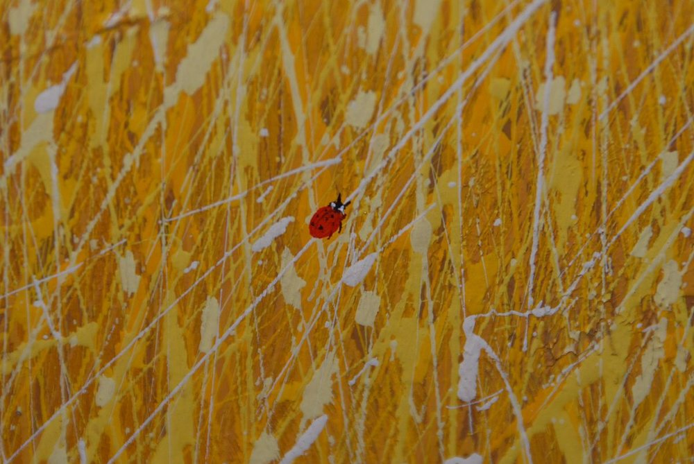 "Photograph of ladybug from Duane Albert Armstrong's ""Fields of Grass"" series. {CC-by-SA-3.0}"