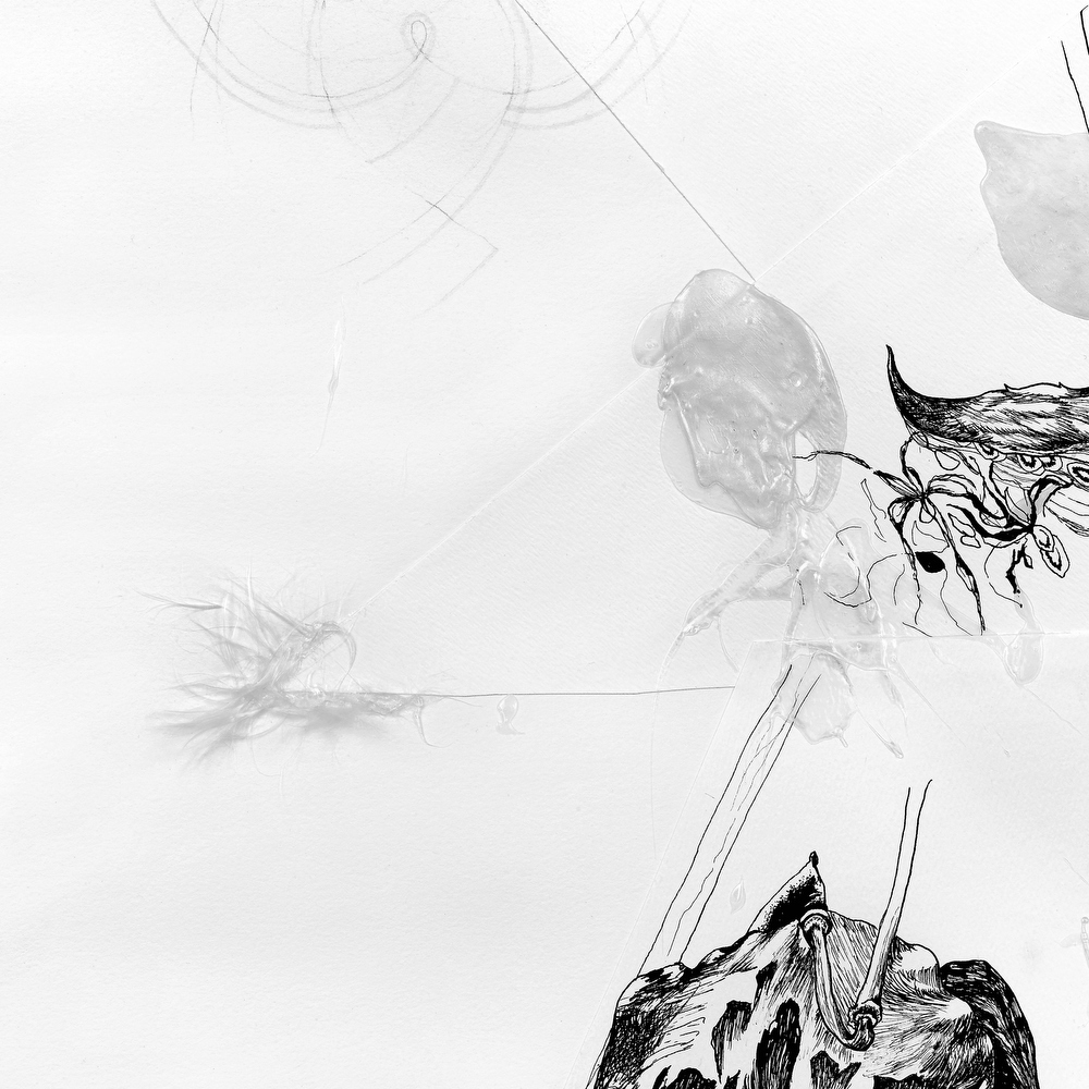 Wishing Life | MEGHAN RIGALI  Pen and ink, pencil, gel medium, acrylic, and silk of the milkweed pod, 3 x 4 ft., 2005