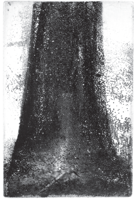 Tree Trunk II (Douglas Fir)  Etching, 9 x 6 in., 2015