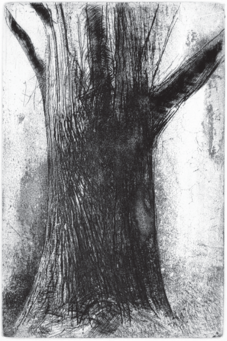 Tree Trunk III (Maple)  Etching, 9 x 6 in., 2015