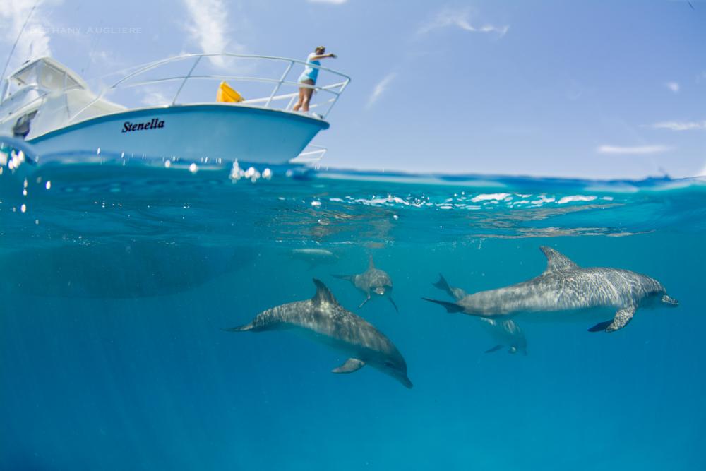 CrewSearchforDolphins.jpg
