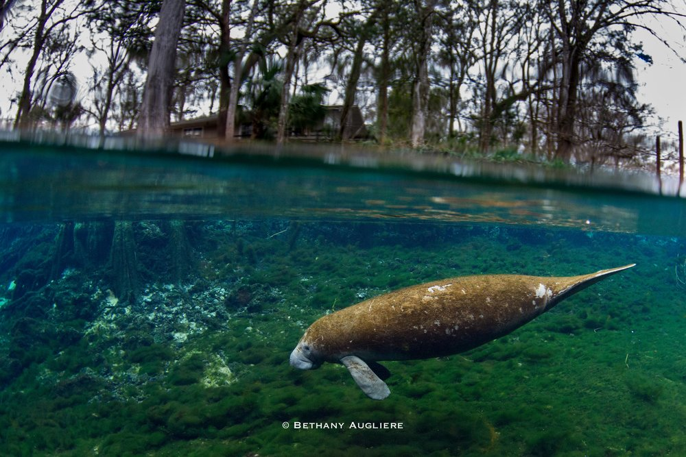 Manatee_Backyard.jpg