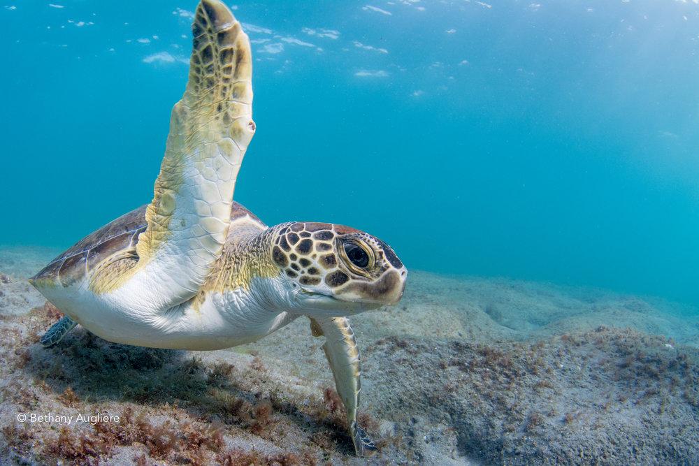 turtleeee.jpg